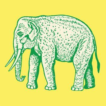 imagen-web-elefante-redimensionada